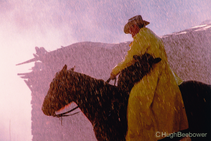 Cowboy and Calf in the Rain | Beebower Productions