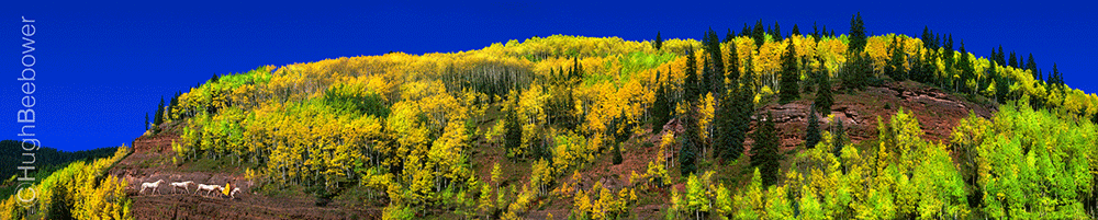 Fall Aspens and Cowboy | Beebower Productions