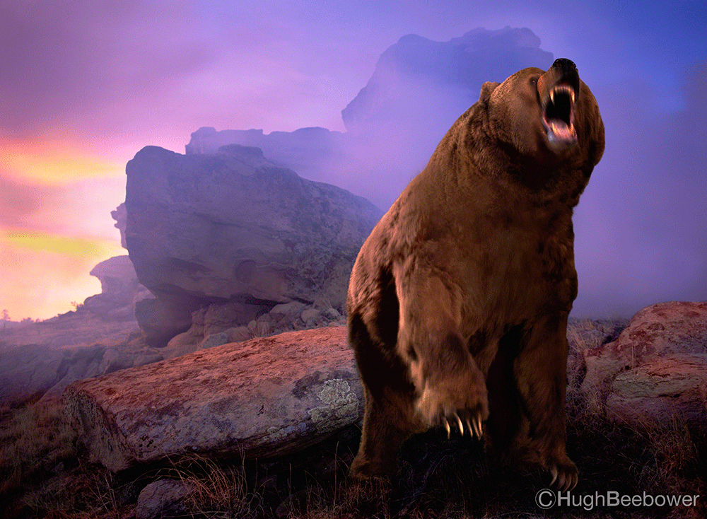 Bear on the Rocks | Beebower Productions