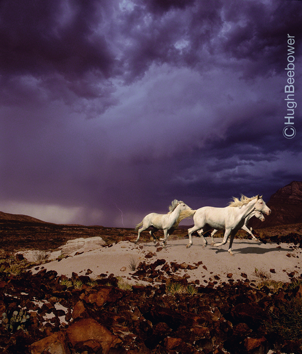 Storm Horses | Beebower Productions