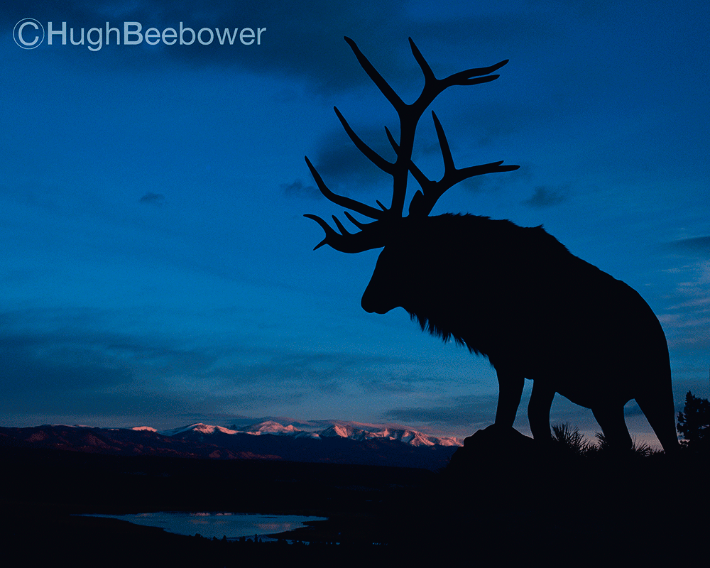 Elk | Beebower Productions