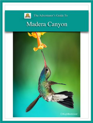 Adventure Guide Madera Canyon Cover | Beebower Productions