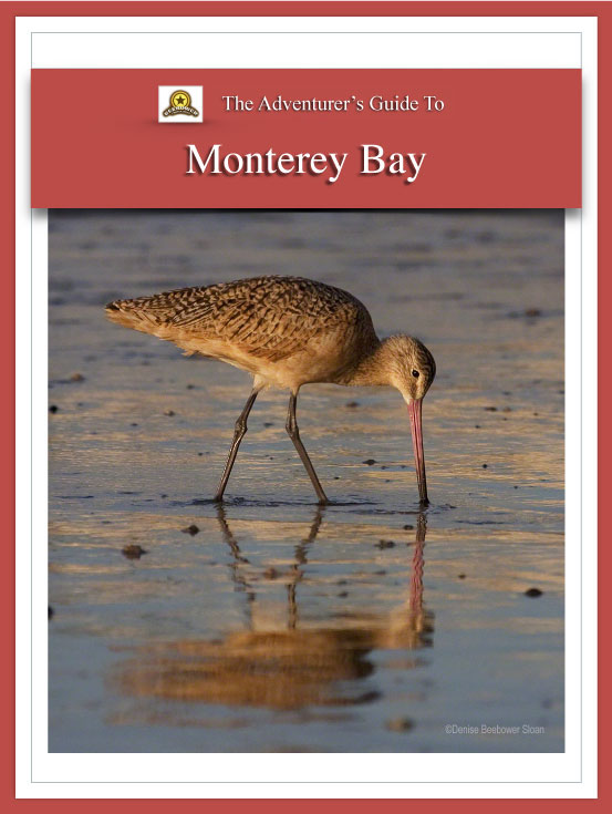 Adventure Guide Monterey Bay Cover | Beebower Productions